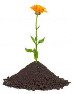 compost-grond-alkmaar